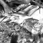 06-Melepas Getir Hidup di Jagal Sapi