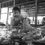 07-Melepas Getir Hidup di Jagal Sapi