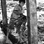 09-Melepas Getir Hidup di Jagal Sapi