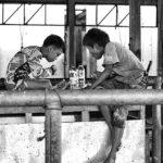 11-Melepas Getir Hidup di Jagal Sapi