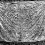 12-Melepas Getir Hidup di Jagal Sapi