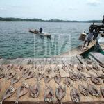 Warga suku Bajo berangkat melaut untuk menancing ikan di Pulau Kabalutan, Kepulauan Togean, Tojo Unauna, Sulawesi Tengah. ANTARAFOTO/Basri Marzuki/18